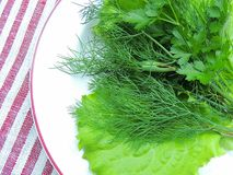 Herbs and lettuce leaves on a white plate. Herbs and lettuce leaves on a white plate, linen tablecloth stock image