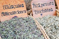 Herbs medicinal Royalty Free Stock Photos
