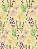 Herbs and medicinal plants collection seamless pattern. Medicinal plants collection seamless pattern. Vector hand drawn isolated objects on white Royalty Free Stock Images