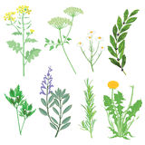 Herbs medicinal plants and weeds Stock Photo
