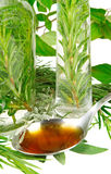 Herbs for medicine Royalty Free Stock Images