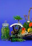 Herbs for medicine Stock Photos