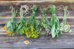 Herbs. Medicine herbs hanging and drying Stock Photo