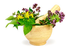 Herbs in a mortar Stock Photography