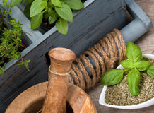 Herbs. Mortar and pestle with fresh and dried sweet basil leaves, spicy basil plants and thyme. Healthy ingredients for flavour stock images