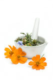 Herbs with a mortar and pestle Royalty Free Stock Photo