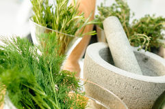 Herbs and Mortar for spices clode up. Fresh Herbs and Mortar for spices clode up Royalty Free Stock Images