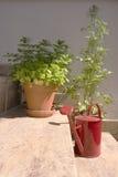 Herbs and mug on stairs. Herbs and mug lying on house stairs Stock Photo