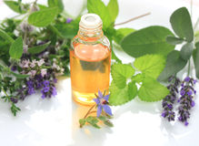 Herbs and oil Royalty Free Stock Photography