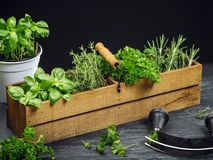 Herbs in old wood box Stock Photo