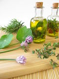 Herbs in olive oil Royalty Free Stock Photography