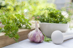 Herbs in the pestle and garlic on the table Royalty Free Stock Image