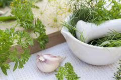 Herbs in the pestle and garlic on the table Royalty Free Stock Images