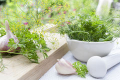 Herbs in the pestle and garlic on the table Stock Images