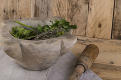 Herbs and pestle and mortar. Wooden pestle and stone mortar for crushing and grinding herbs and spices Royalty Free Stock Photos