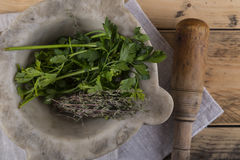 Herbs in pestle and mortar Royalty Free Stock Image