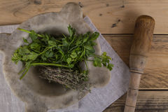 Herbs with pestle and mortar Stock Photography