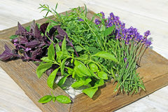 Herbs on picture frame royalty free stock image