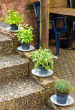 Herbs in plant pots growing on the garden stairs Royalty Free Stock Images