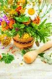 herbs Plantas medicinais fotos de stock royalty free