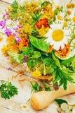 herbs Plantas medicinais foto de stock royalty free