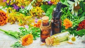 herbs Plantas medicinais imagens de stock