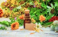 herbs Plantas medicinais foto de stock