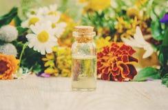 herbs Plantas medicinais nave imagens de stock