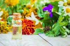 herbs Plantas medicinais nave imagem de stock royalty free