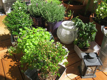 Herbs and plants on balcony royalty free stock photos