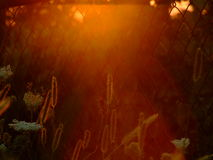 Herbs plants at sunset Royalty Free Stock Images
