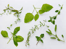 Herbs plateau stock images
