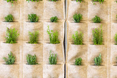 Herbs into pockets of a cloth wall Stock Photo