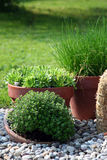 Herbs in the pot. For kitchen used and aromatic decoration outside in the house royalty free stock photography