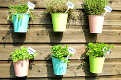 Herbs in pot in the garden Stock Image