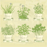 Herbs. In pot, garlic, parsley, dill, sage and basil, herbal vintage background royalty free illustration