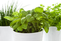 Herbs in a pot Royalty Free Stock Photo