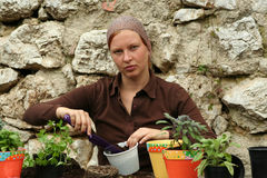 Herbs pot planting. To growth inside in the house Stock Images