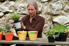 Herbs pot planting. To growth inside in the house Royalty Free Stock Photography