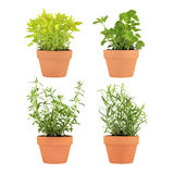 Herbs In Pots. Herb selection of marjoram, lemon balm, tarragon and hyssop growing in four terracotta pots over white background royalty free stock photos