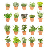 Herbs in Pots. Large herb selection growing in twenty terracotta pots over white background Royalty Free Stock Image