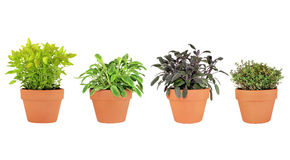 Herbs in Pots Stock Photography