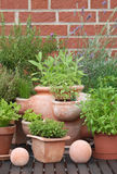 Herbs in pots Royalty Free Stock Photo