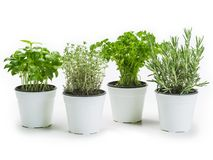 Herbs in pots over white background. Photo of basil, thyme, parsley and rosemary in white pots over a white background royalty free stock photo