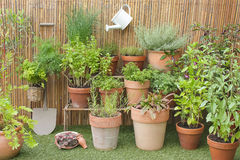 Herbs in pots Stock Image