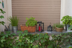 Herbs in pots on the window. Stock Photography