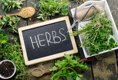 Herbs on rustic wooden background Royalty Free Stock Photos