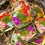 Herbs of Sacrifice on Bali. Religion. Stock Photography