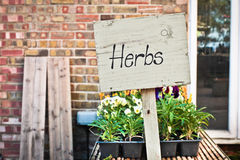 Herbs sale Stock Photography