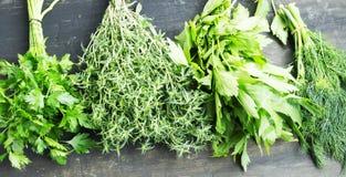 herbs Salsa, tomilho, aneto e Lovage cozinhando ervas Fotos de Stock Royalty Free